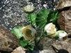 Букет водных лилий